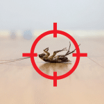 Pest Control - Termite Inspections in Moss Vale, NSW